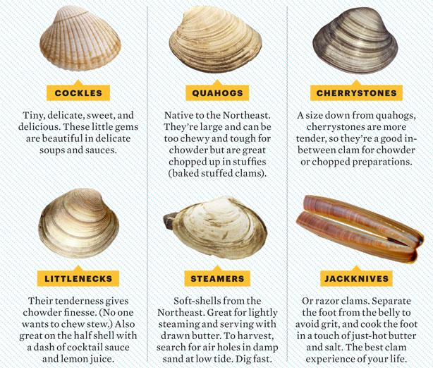 Shellfishing Cape Cod: BarnstablePrecinct7